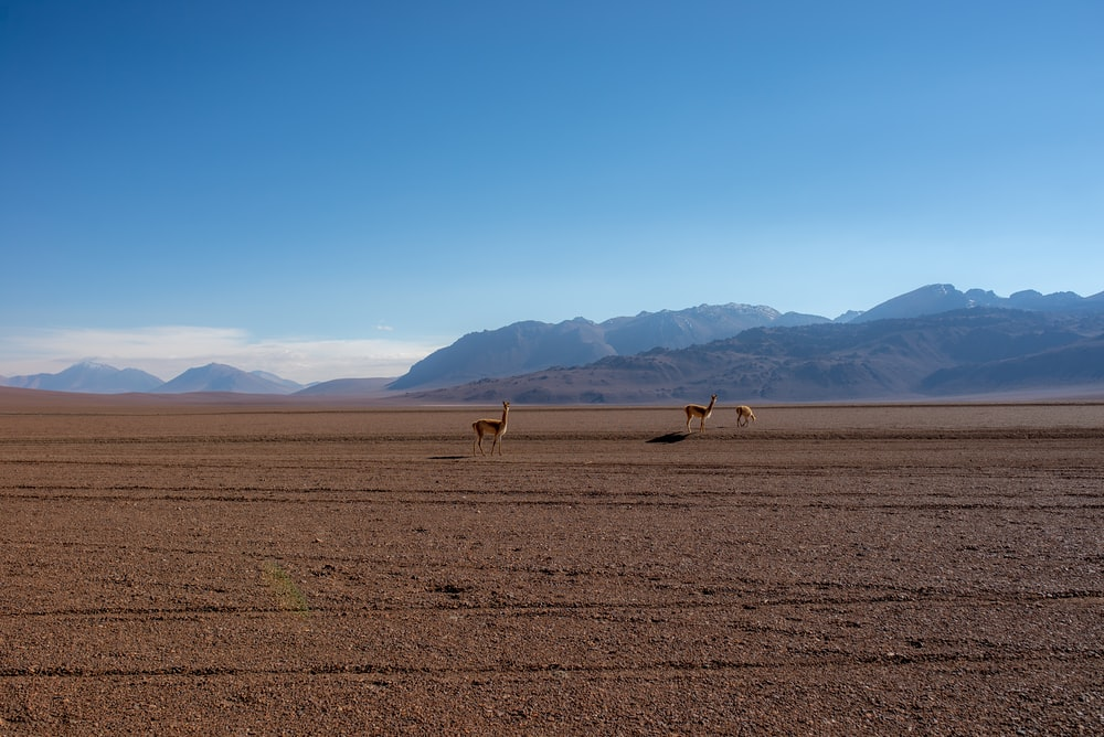 landscape photo of a brown desert