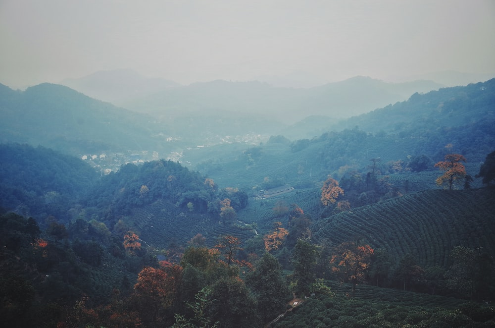 view of hills covered with trees