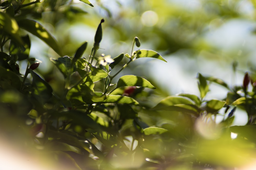 green-leafed trees in selective-focus photography