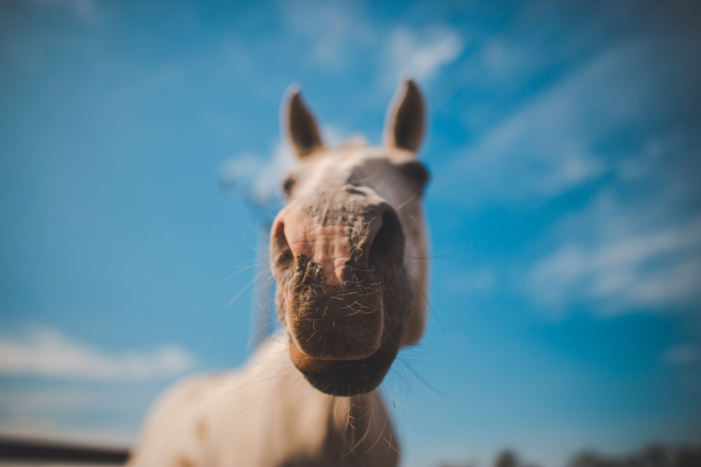 shallow focus photo of white horse