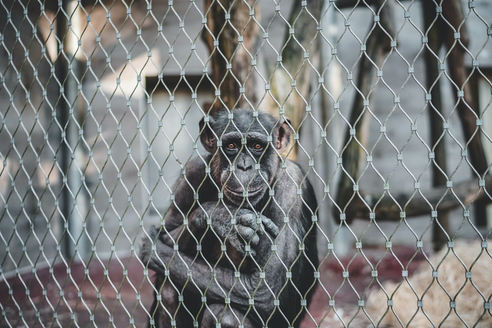 monkey sitting inside a cage