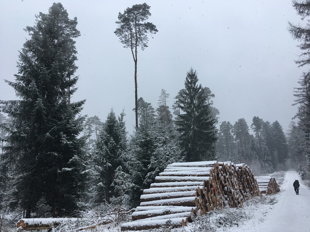 pile of tree logs covered with snow