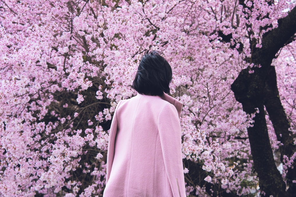 person wearing white jacket facing on blooming pink cherry blossoms