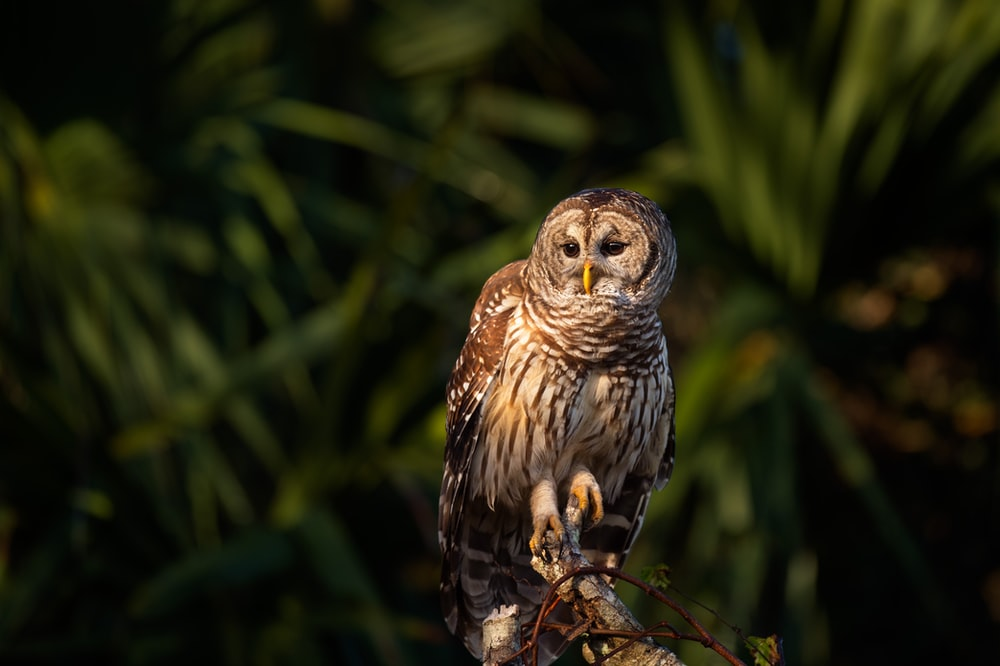 selective focus photography of a brown owl