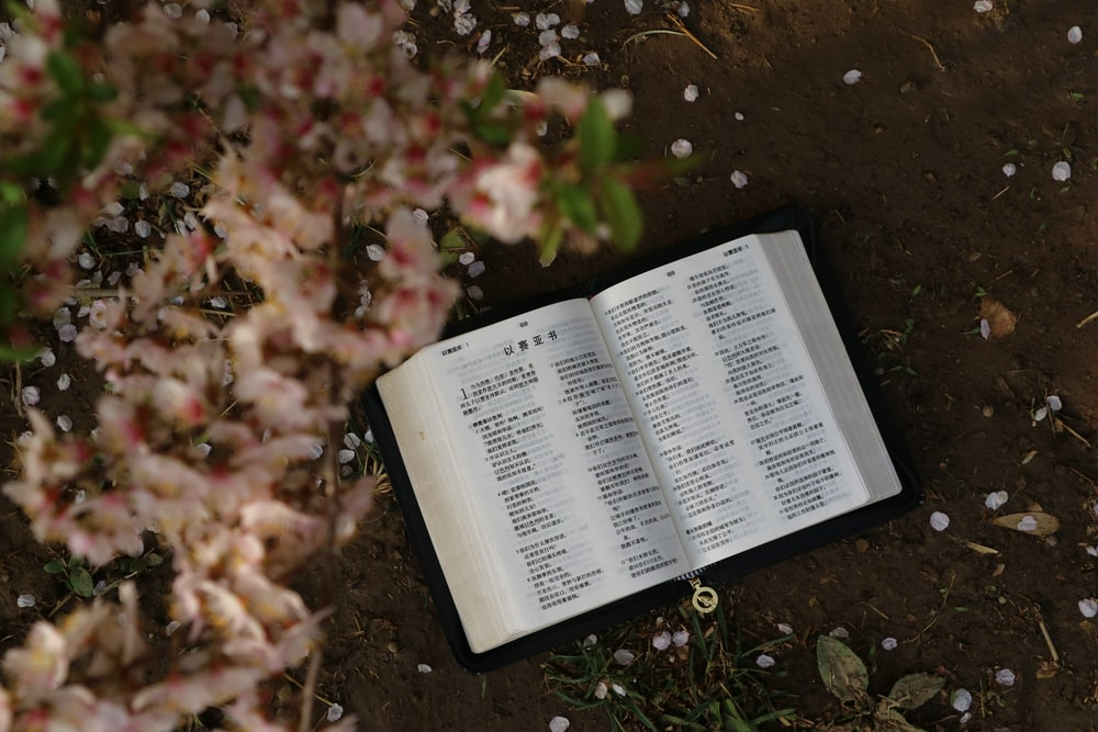 flat lay photography of an open book under a flowering plant