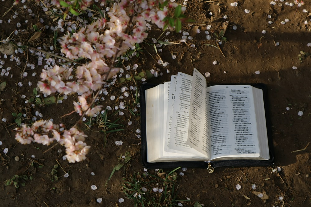 opened book and flowers on ground
