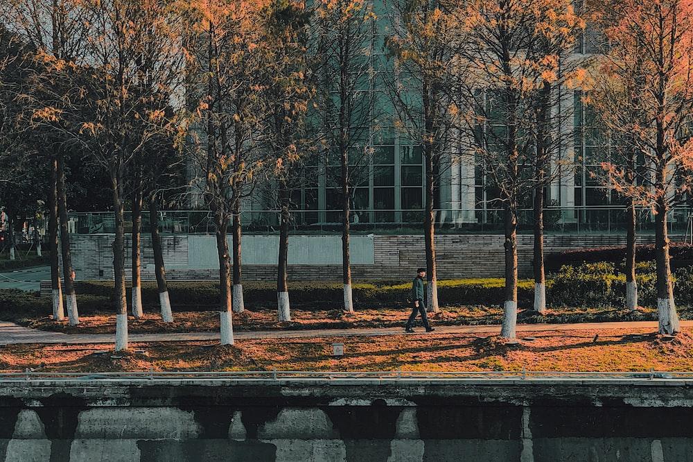 man walking on walkway between yellow trees during golden hour