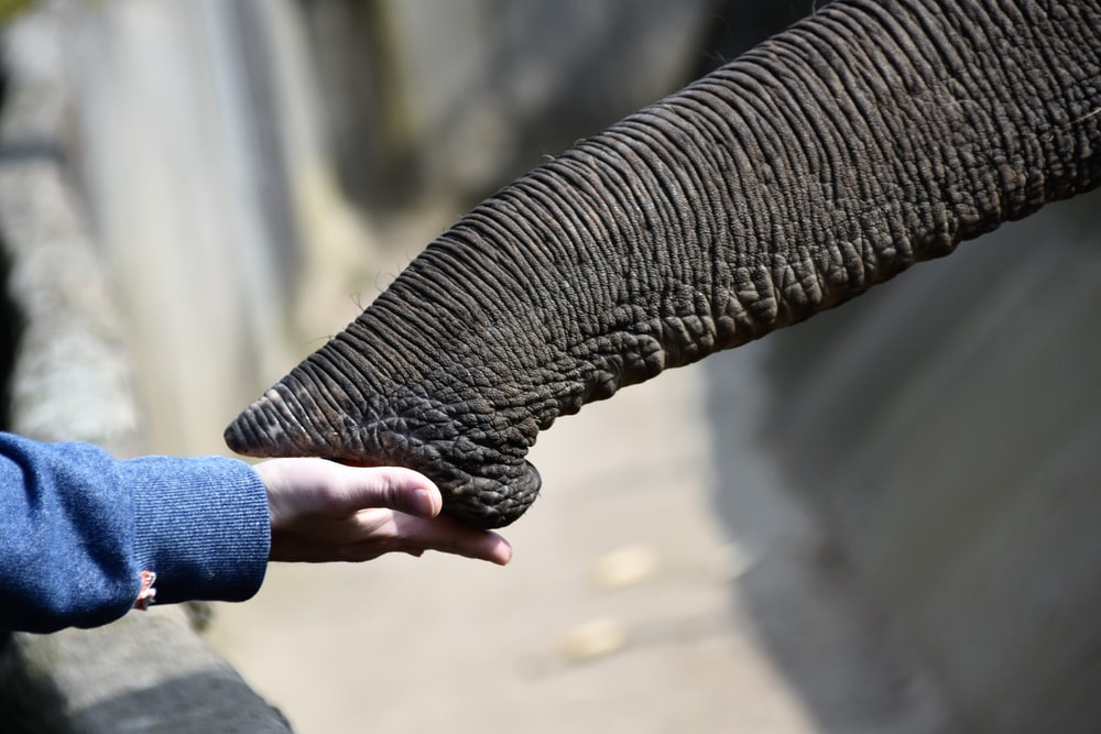 person holding elephant nose