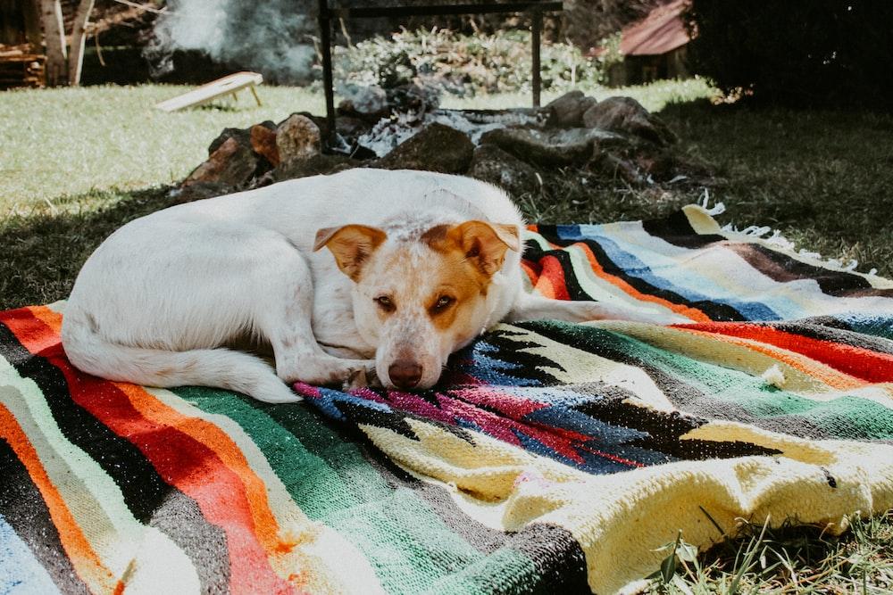 white short-coated dog