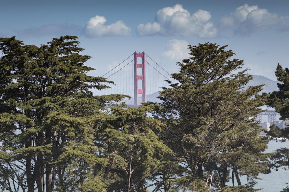 Golden Gate Bridge through forest during daytime