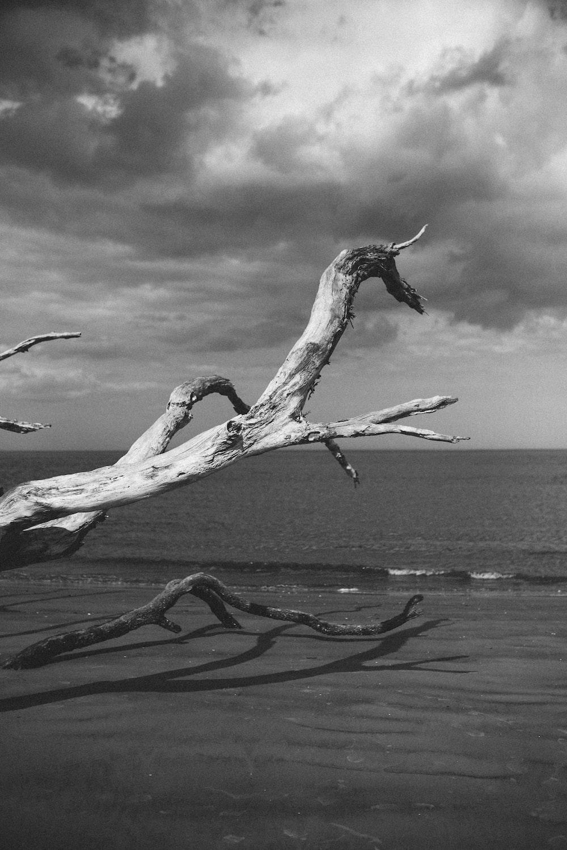 grayscale photo of tree near water