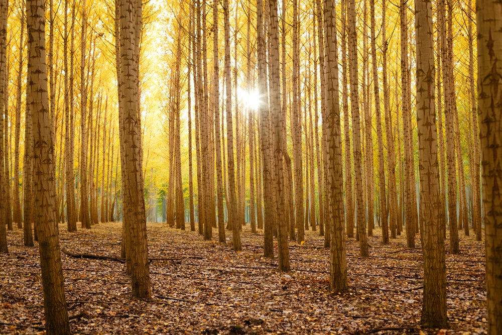 gray forest trees during daytime