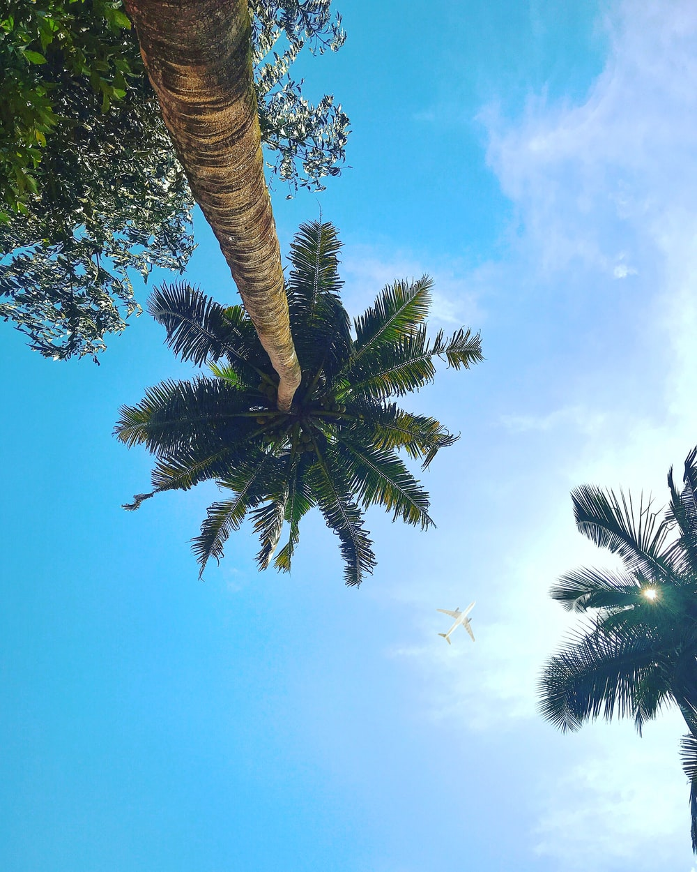 worm eye view of a coconut tree