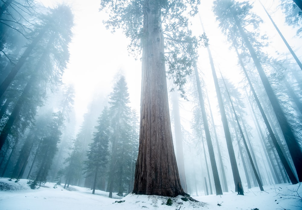 low angle photography of tall tree