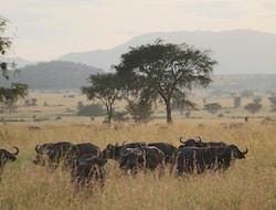 Tsavo West Nationalpark