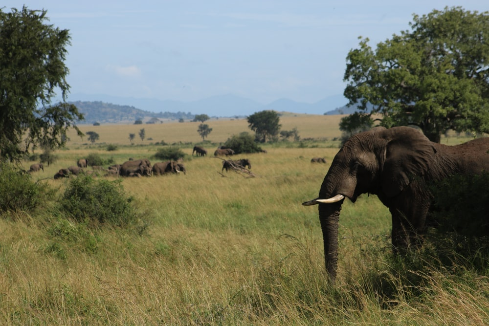 group of elephant on grass field
