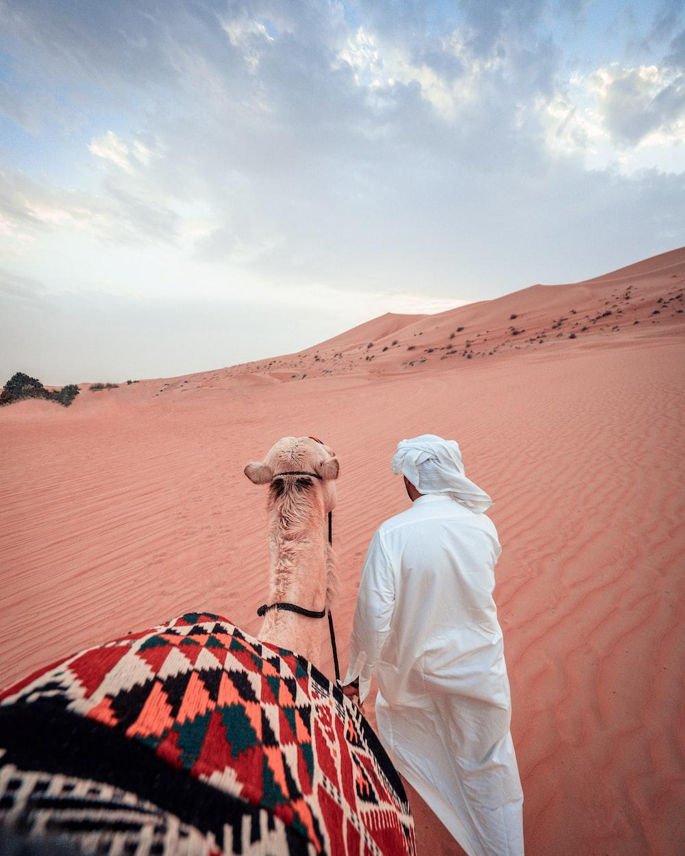 man pulling camel