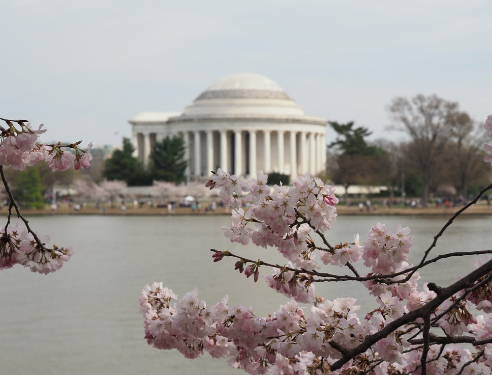 selective focus photography of cherry blossom tree