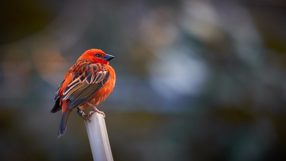 bird perched on stick