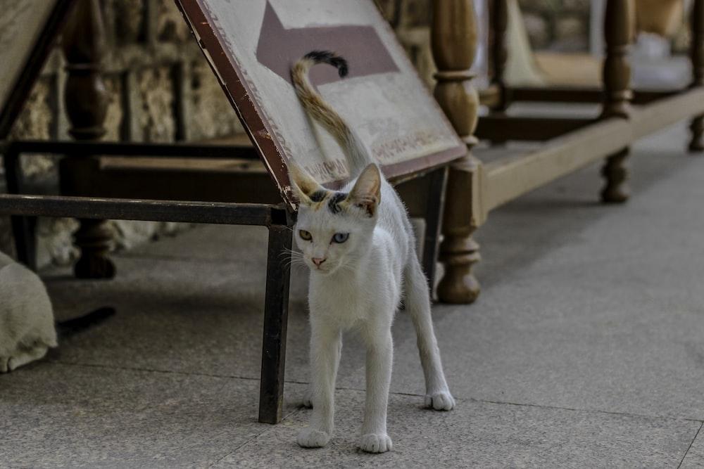 white kitten standing near wooden frame