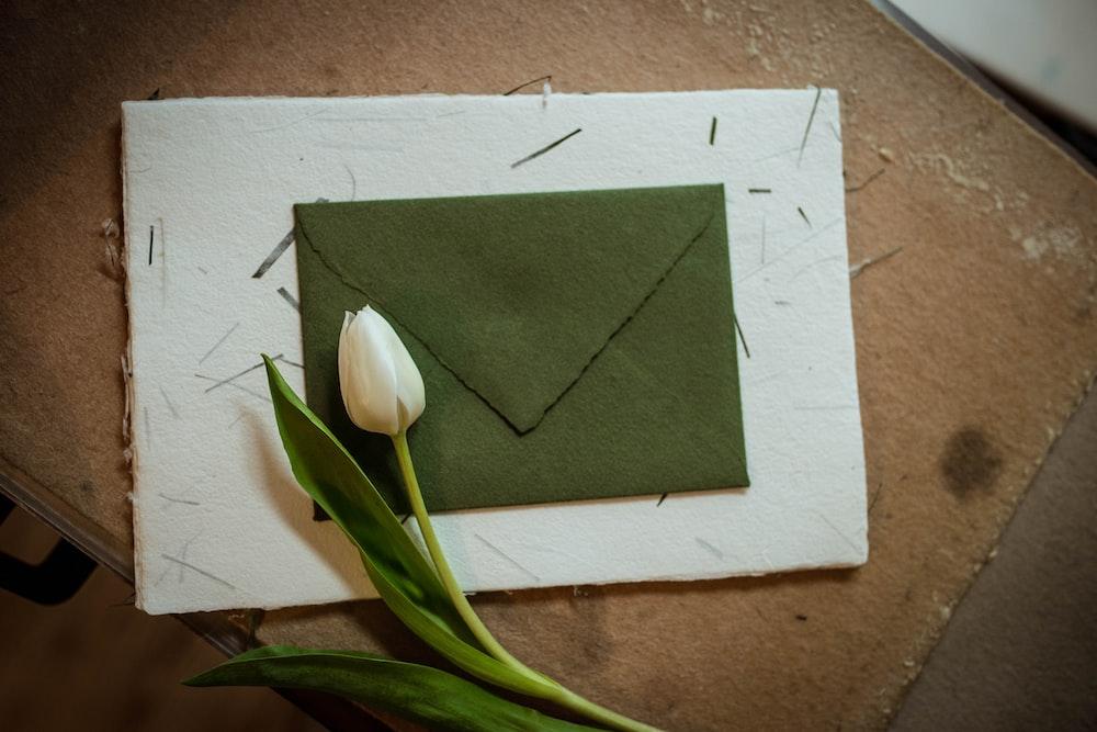 white tulips on green envelope