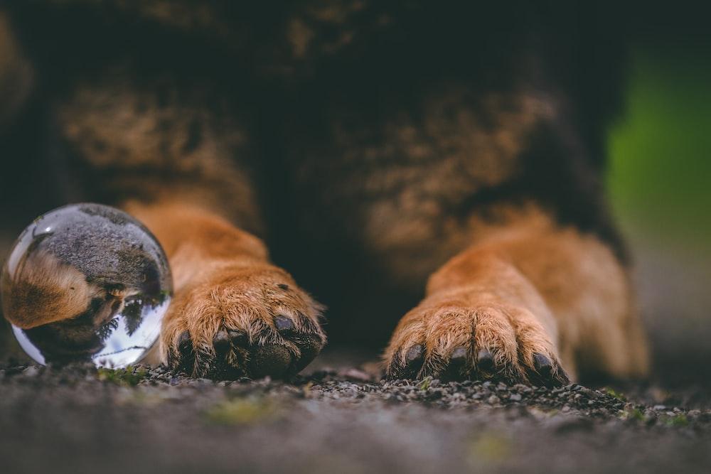 prone lying animal paws