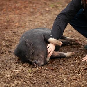 woman holding black pig