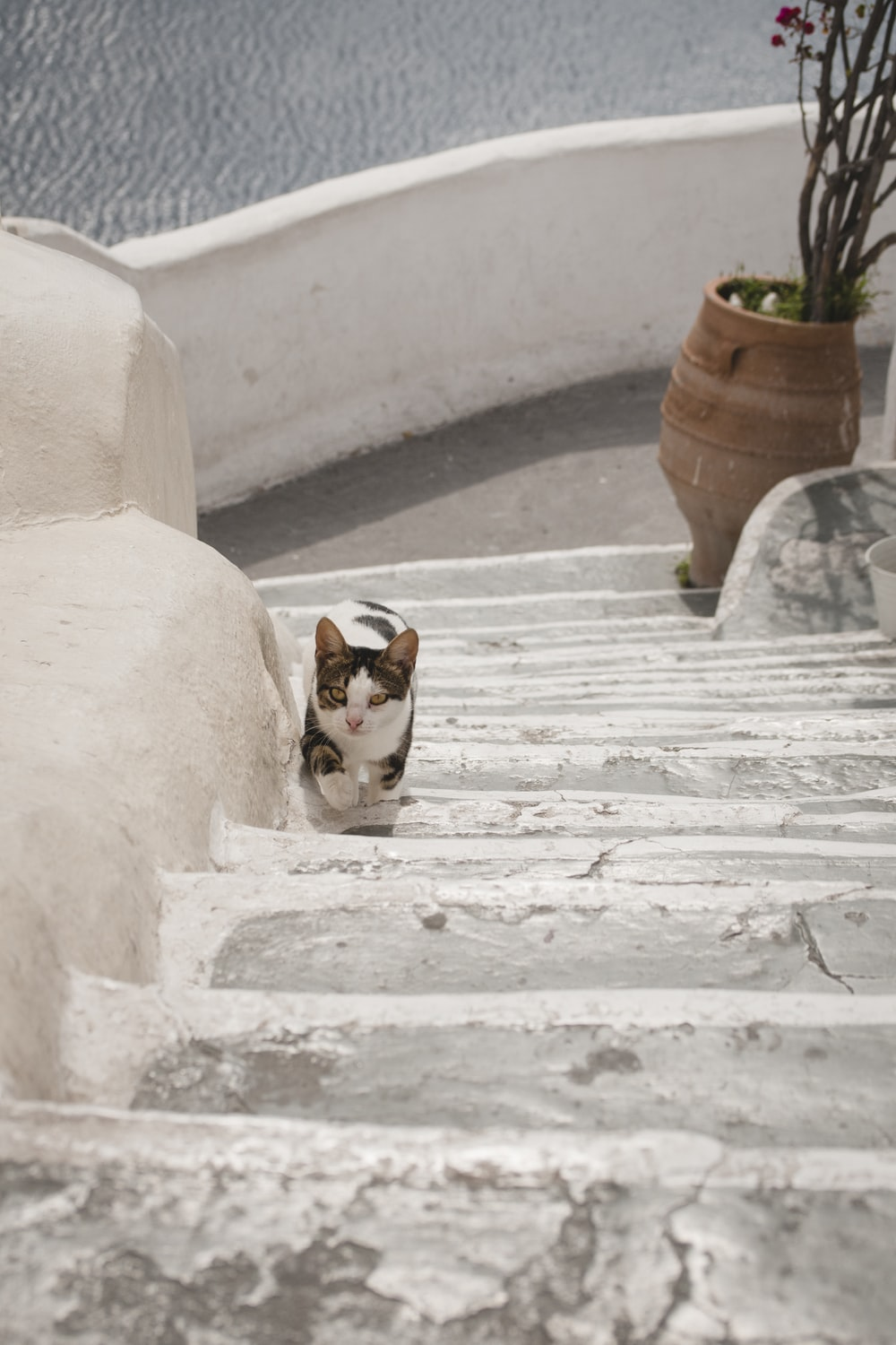 calico cat on stair near plant