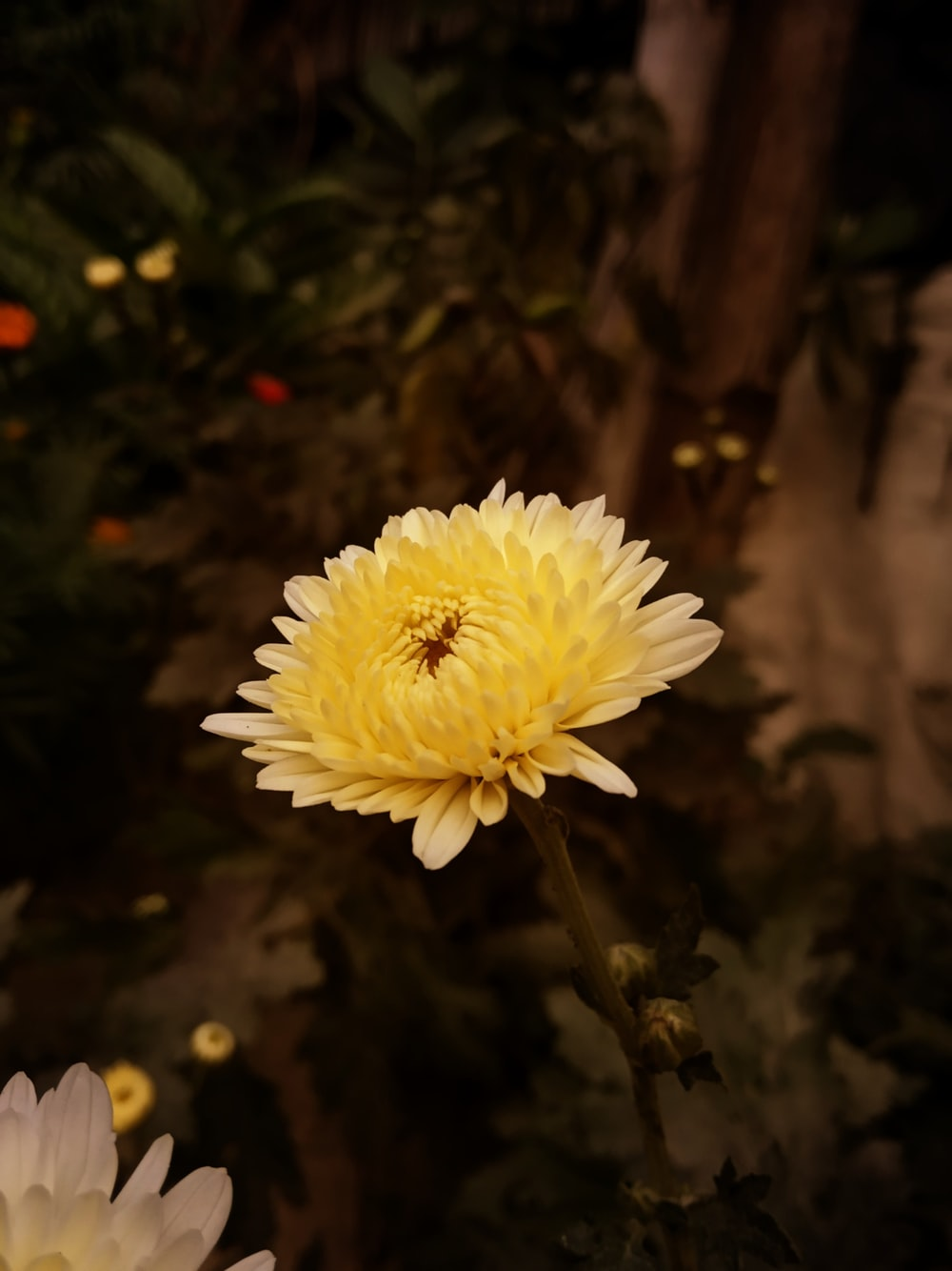 yellow flower at bloom