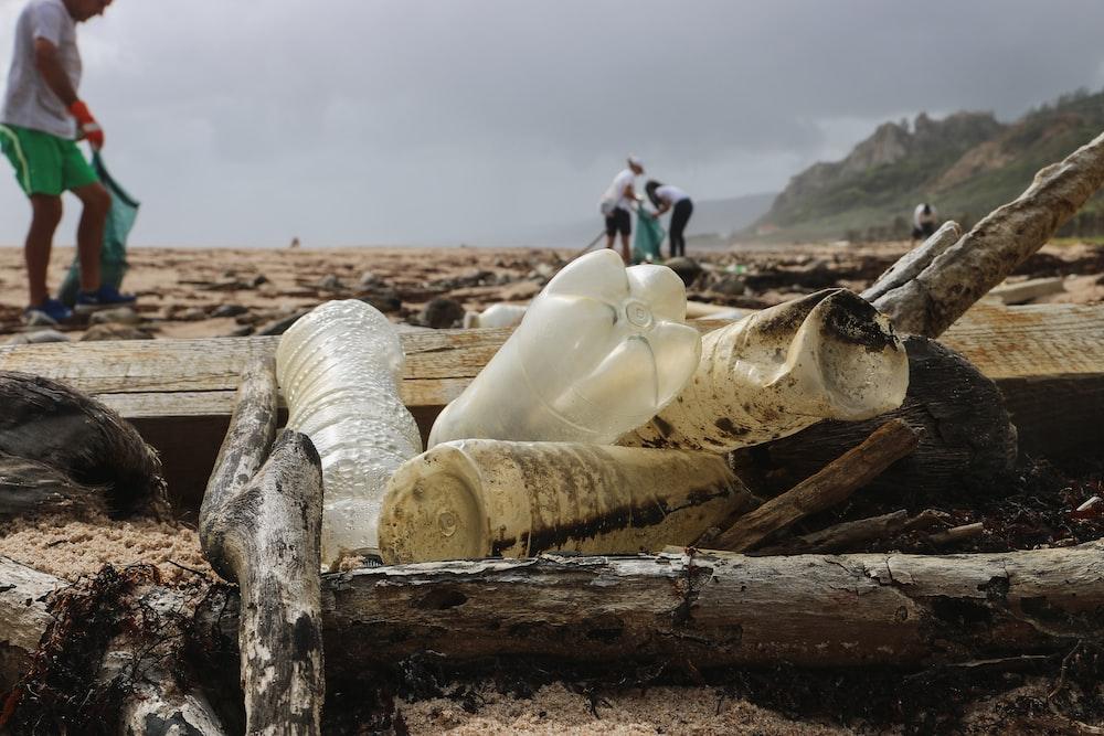 four plastic bottles on piles of wood on shore