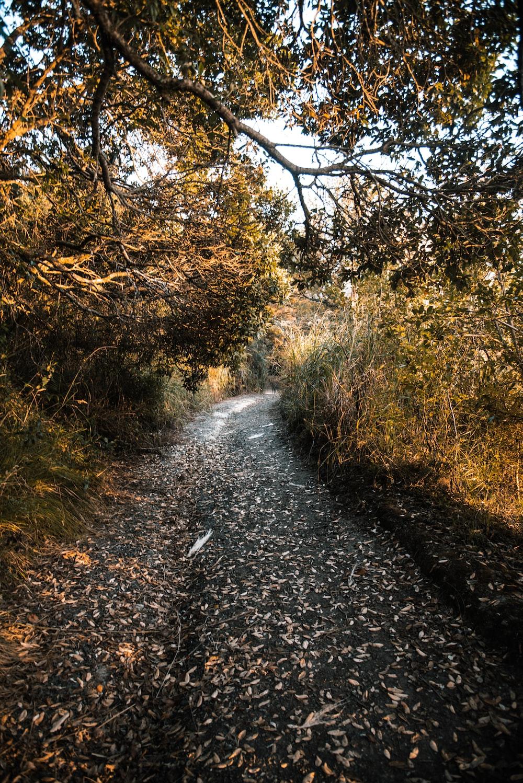 pathway between bushes