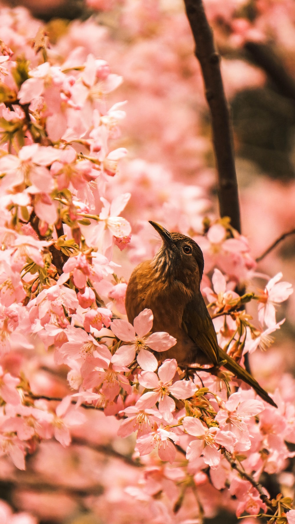 brown bird fetched on tree branch