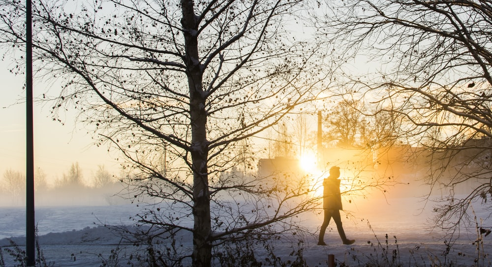 silhouette of walking person beside trees during golden hour