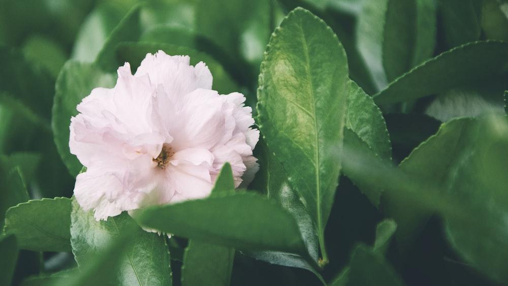 white-petaled flower beside plant during daytime