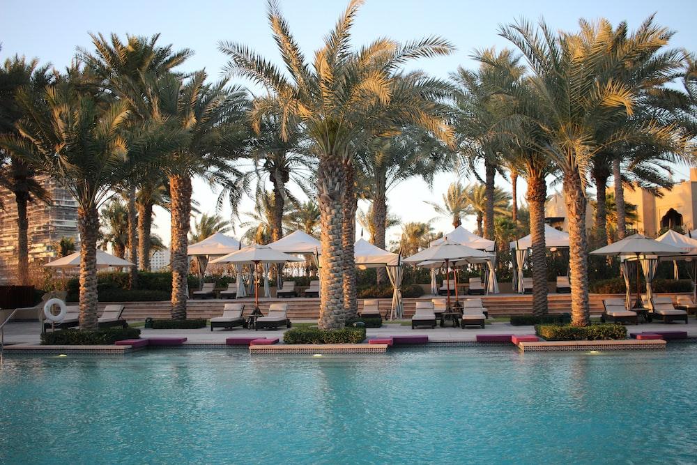 palm trees near pool