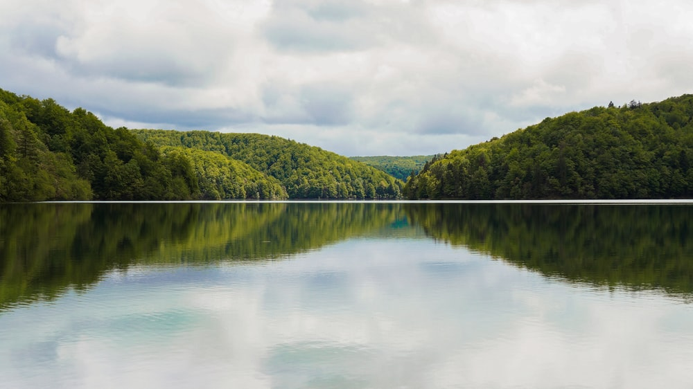 body of water surrounded with trees under white skies