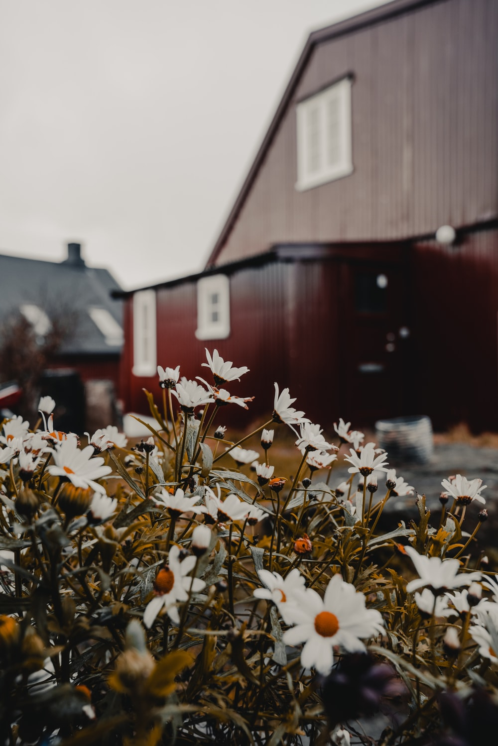 macro photography of white daisies beside building during daytime