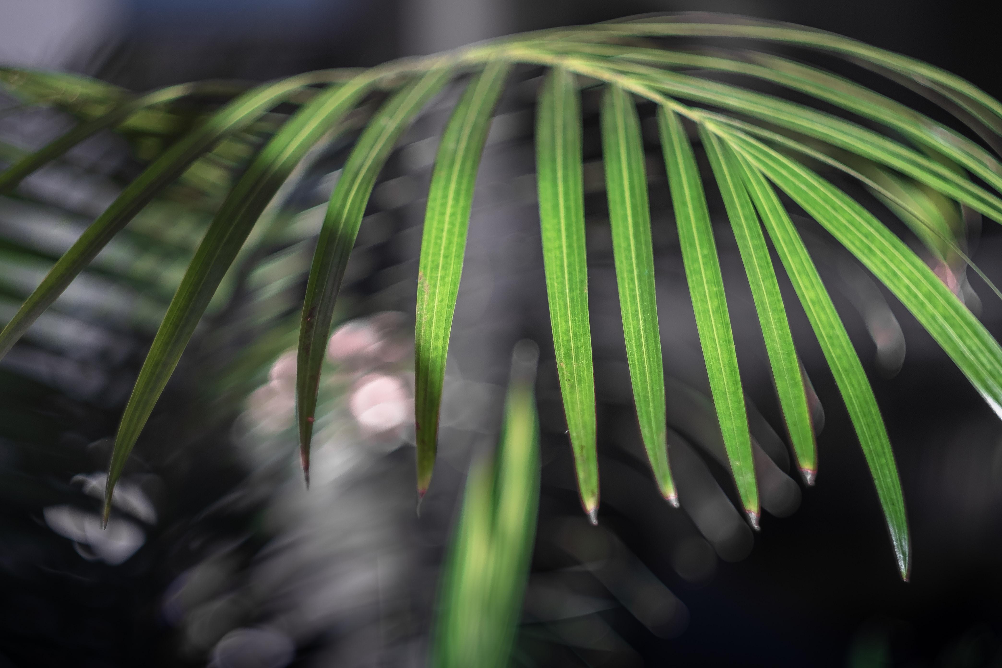 green lefaed plant