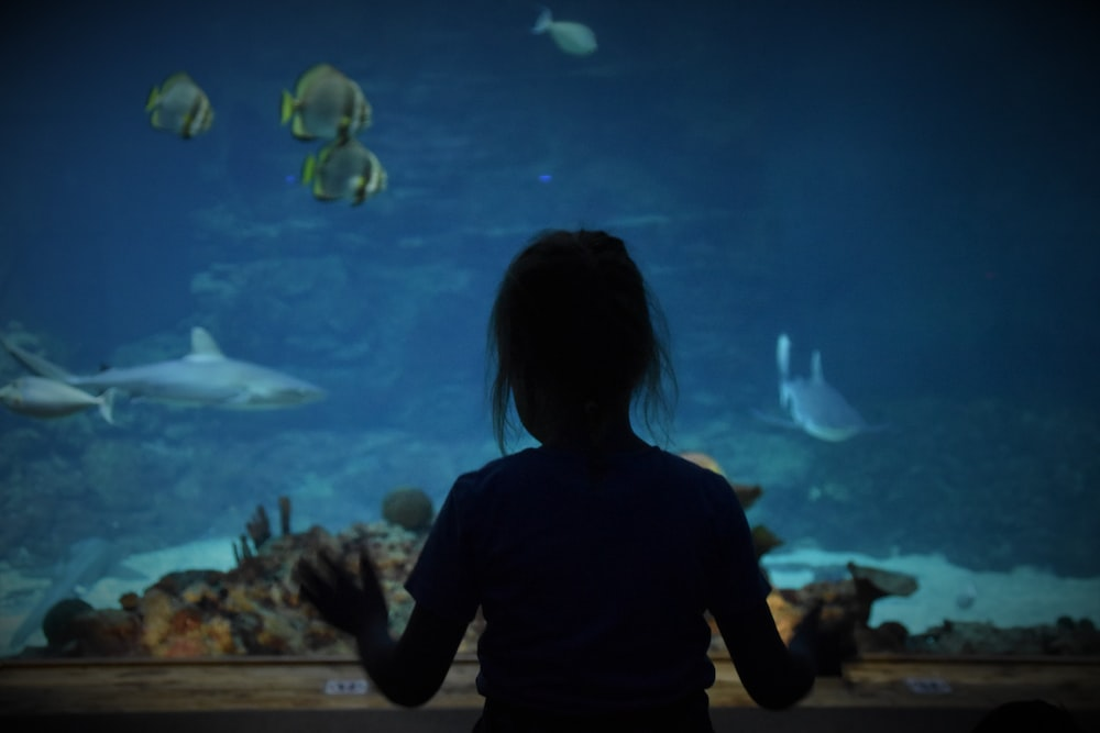 silhouette of woman by aquarium