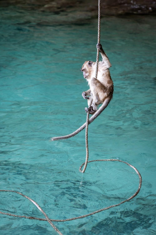 monkey hanging on rope