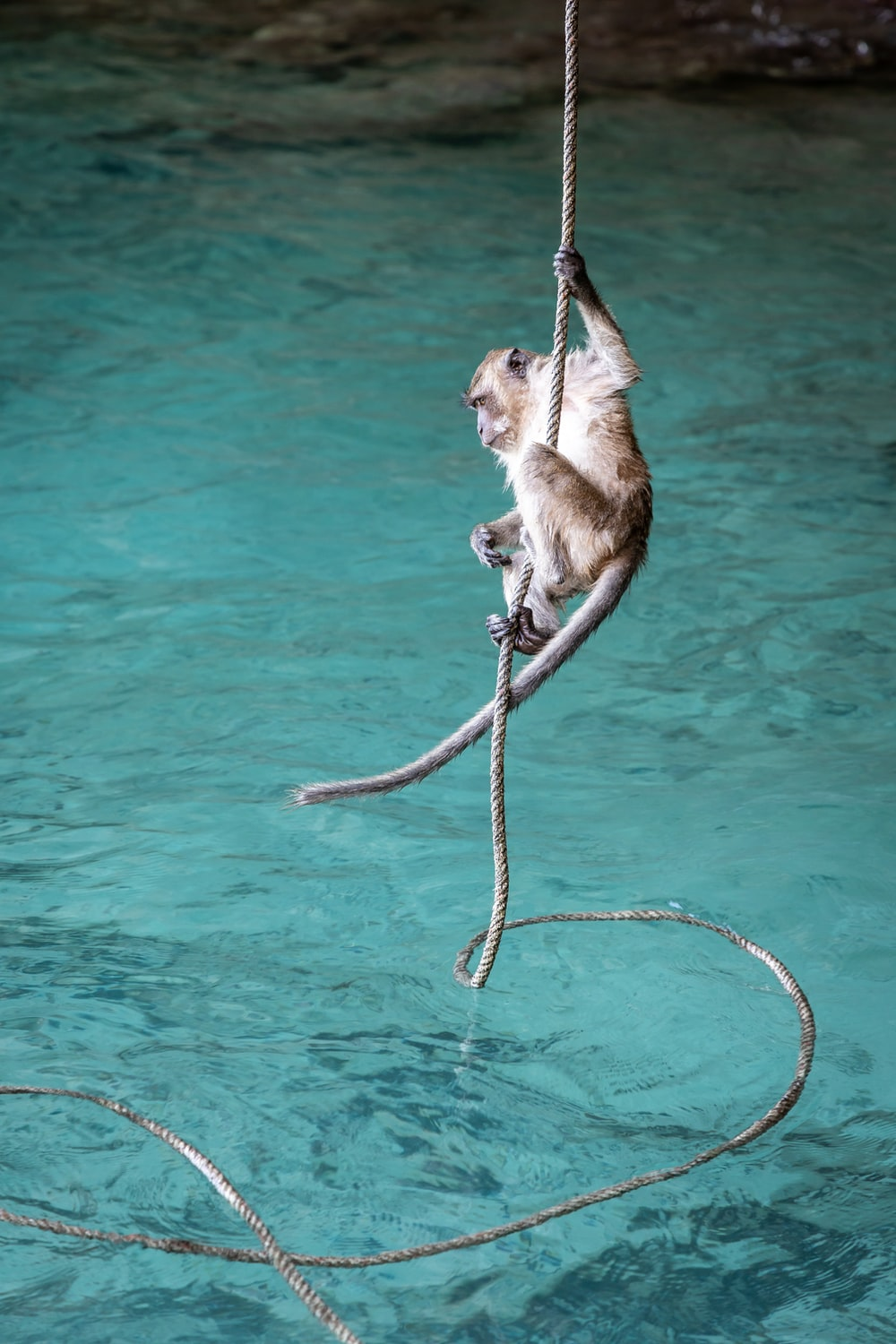 monkey hanging on rope