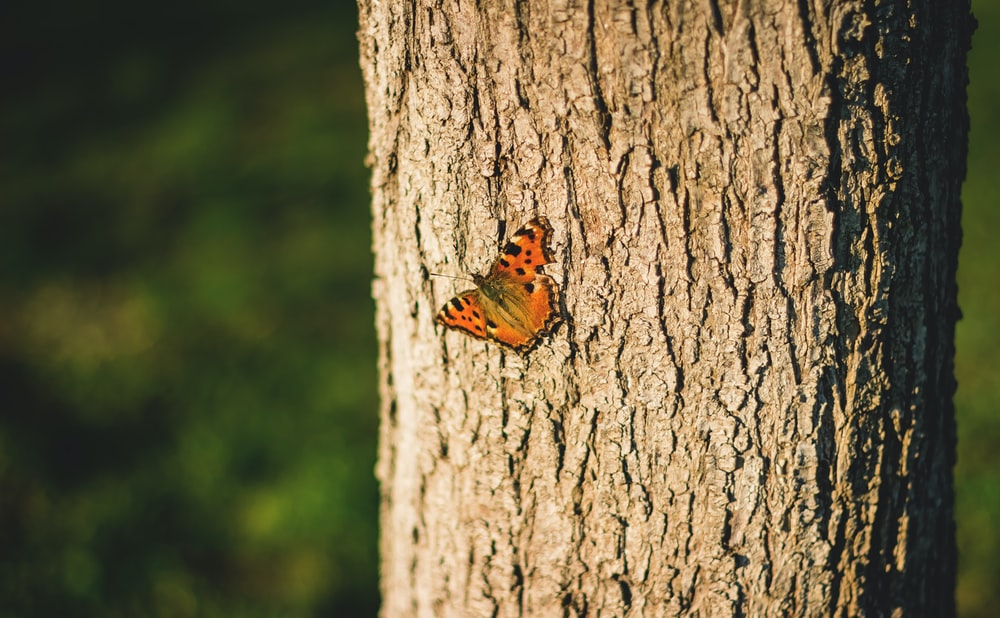 selective focus photography of brown butterfly on tree