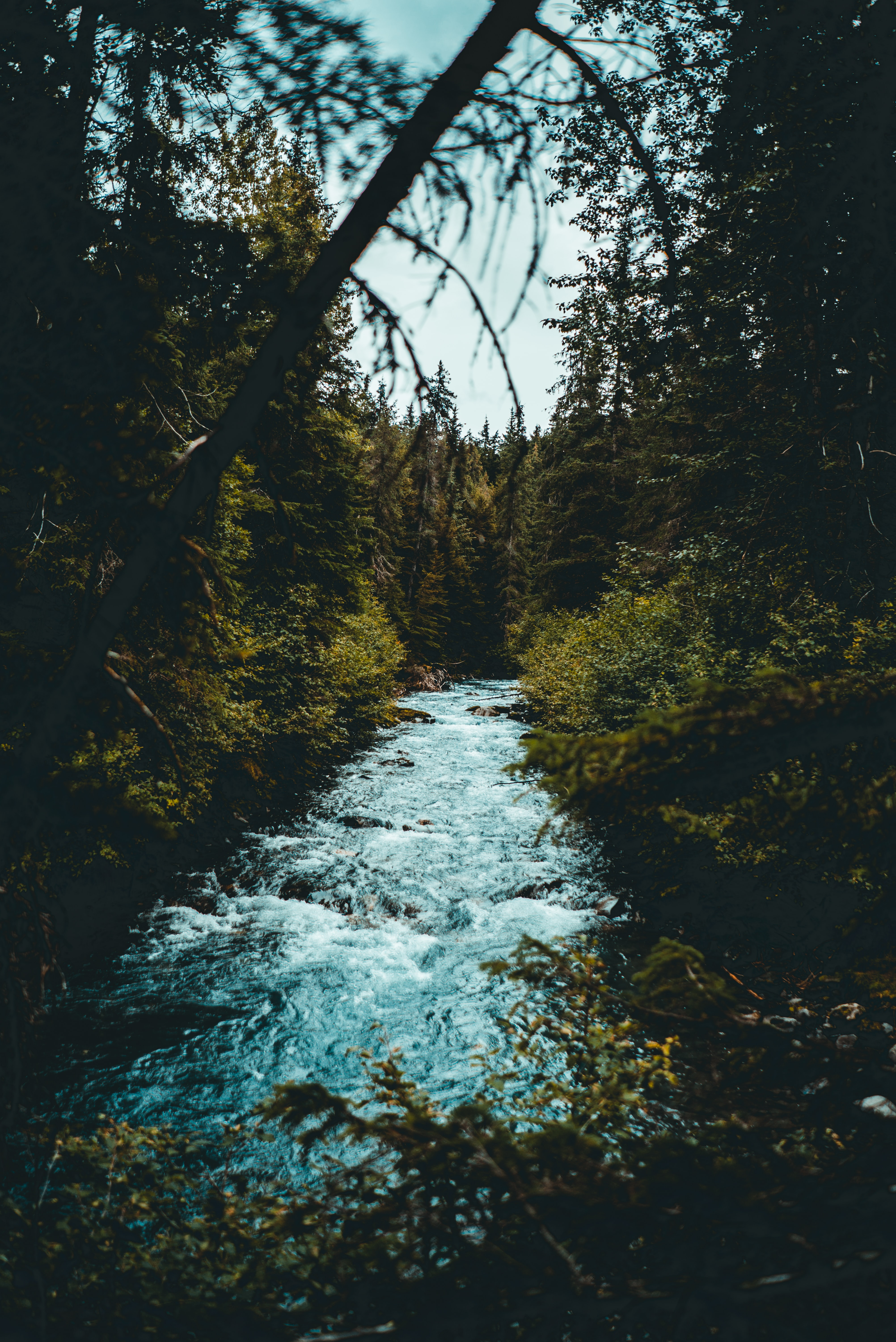 river in between forest