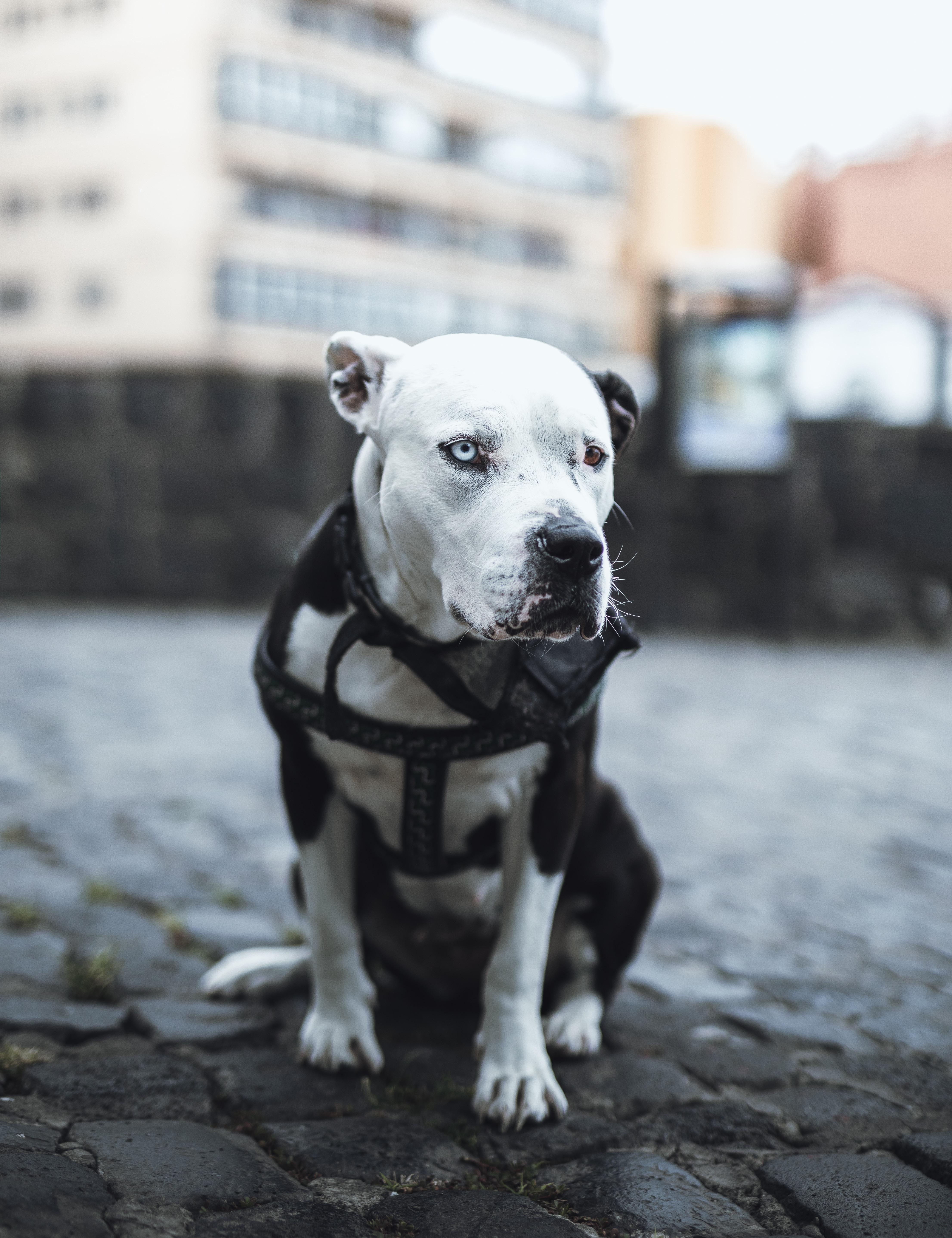 grey scale photography of dog sitting on ground