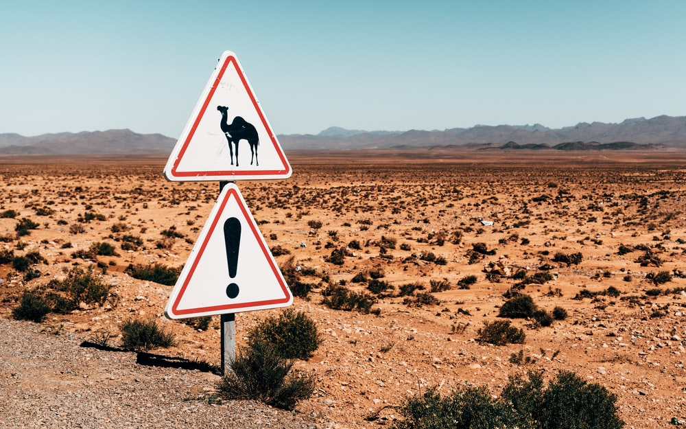 camel sign post