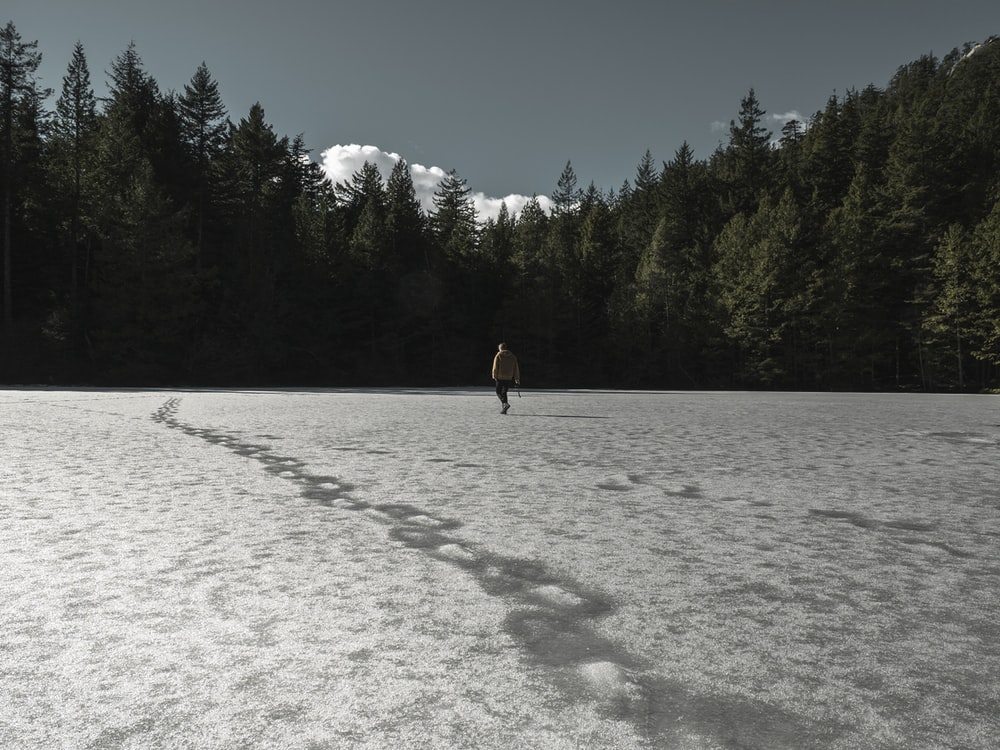 person walking on field covered with snow surrounded with tall and green trees