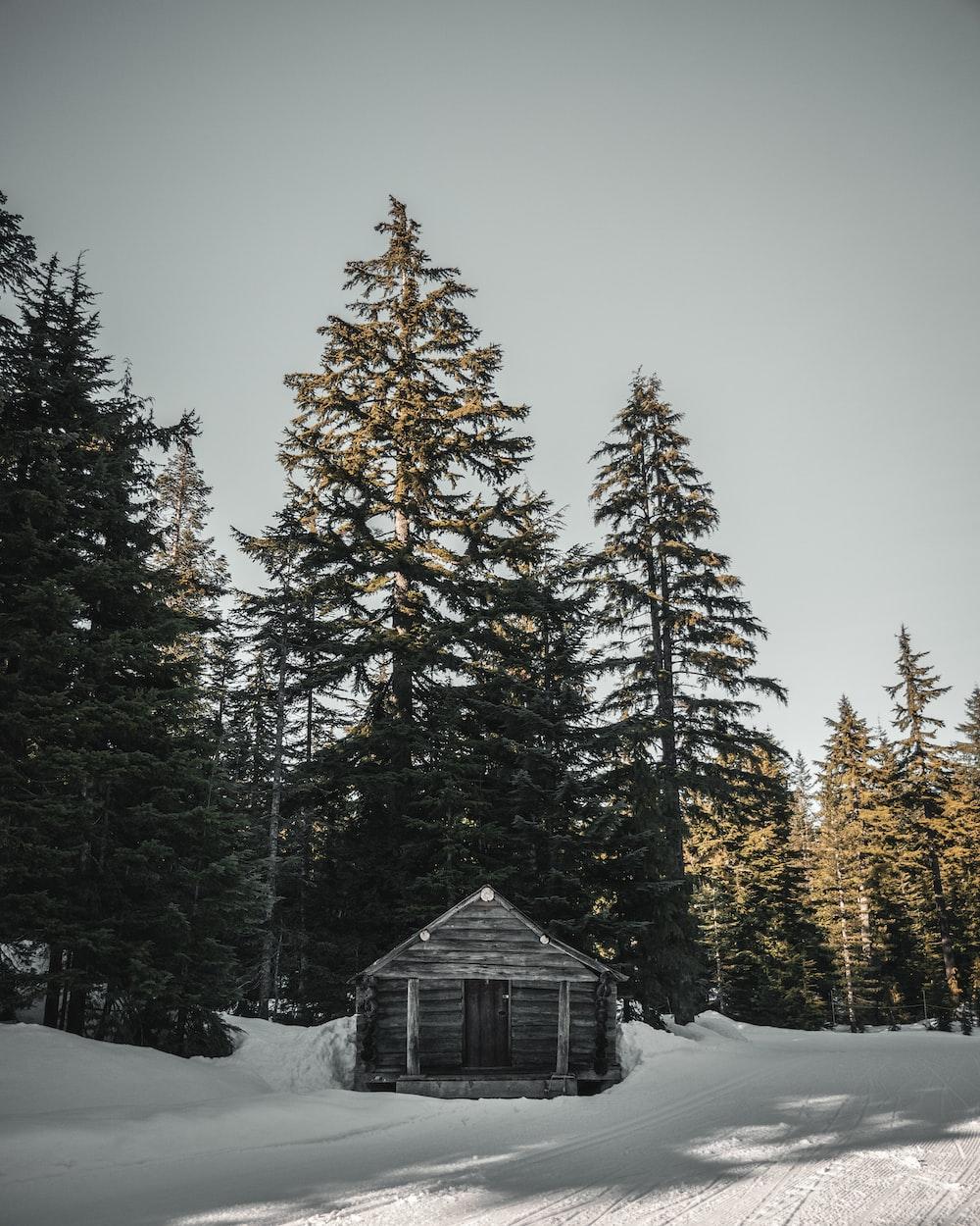 house near tree