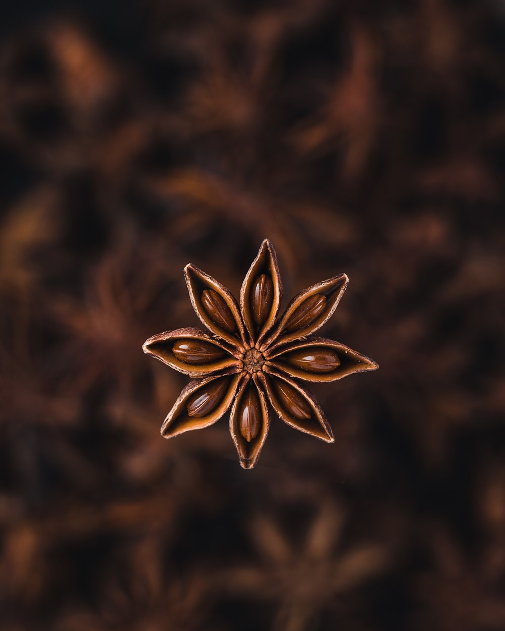 selective focus photography of star anise spice
