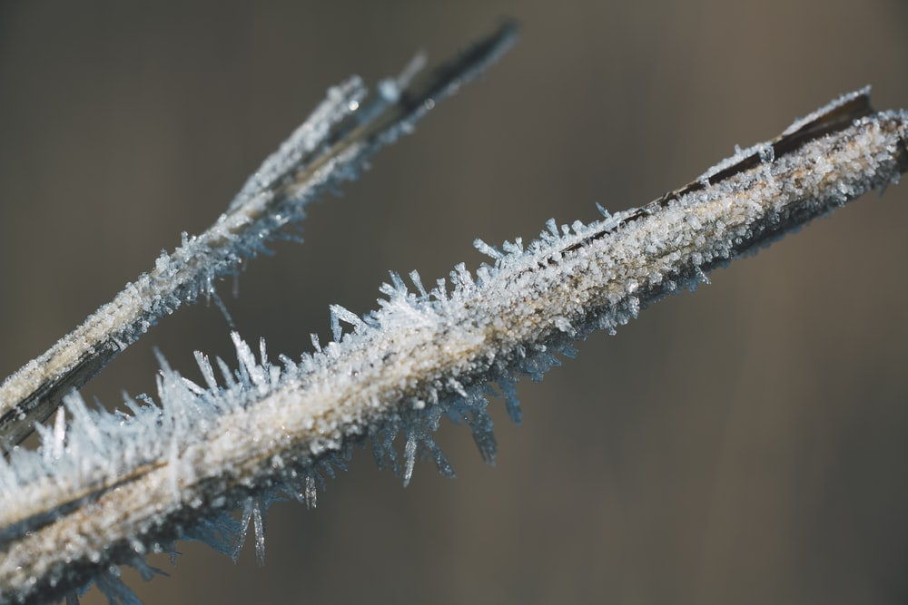 selective focus photography of branch