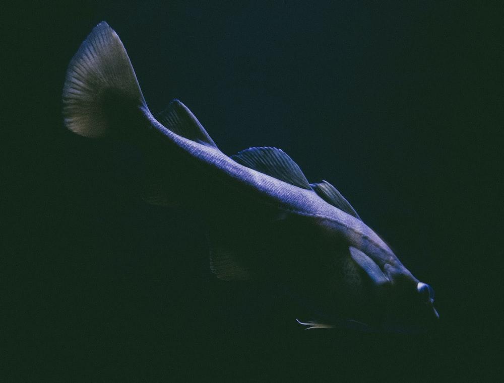 close-up photo of elongated gray fish